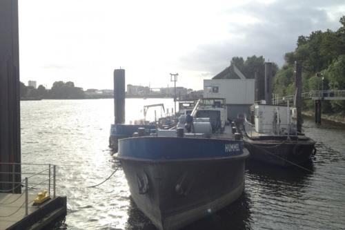 Bei Entenwerder an der Elbe