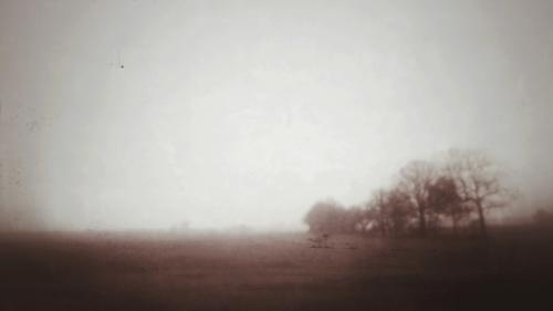 Bäume fliehend