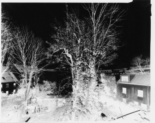 Hof mit Bäumen - 4x5 Großformat Papiernegativ