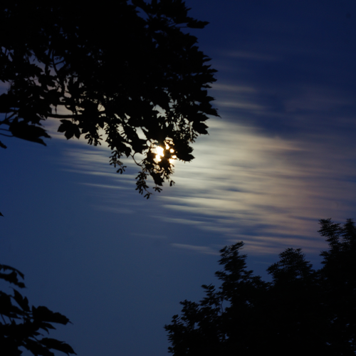 Mond in den Bäumen