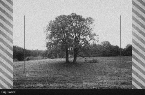 Ausschnittsvorschau, Baum im Jenischpark