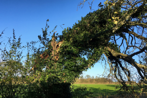 Geknickter Baum