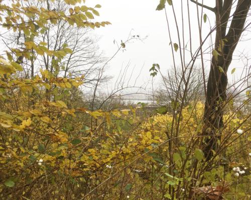 Am Elbhang oberhalb von Neumühlen