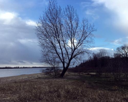 Am Falkensteiner Ufer