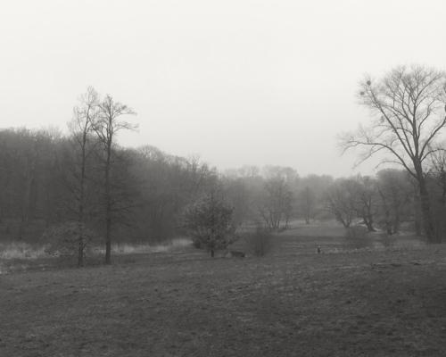 Jenischpark, so grau