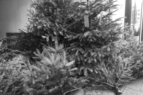 Weihnachtsbäume, abgelegt