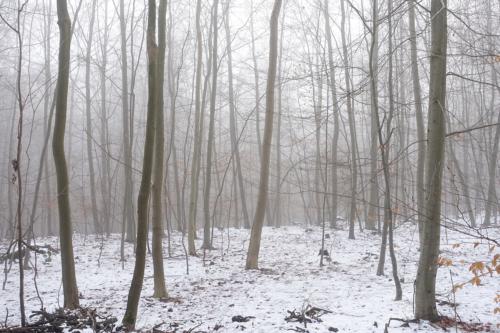 Nebeliger Wald, das Steinkampsholz