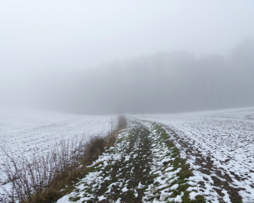 Hinter Reinfeld Auf den nebeligen Wald zu