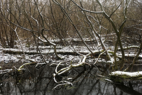 Im Hansdorfer Brook