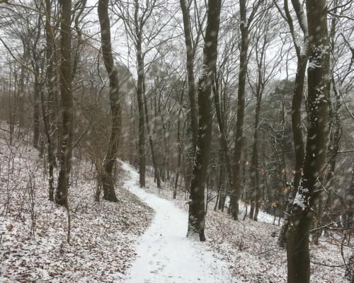 Schneefall im Falkensteiner Wald