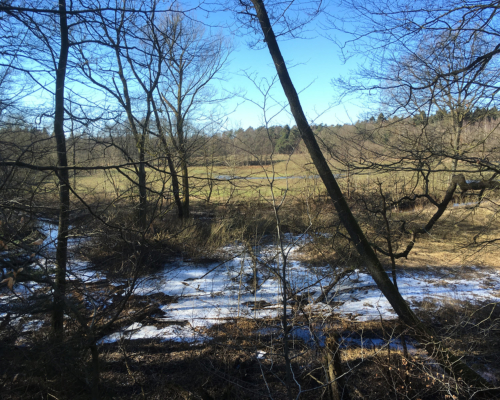 Frostige Alsterwiese