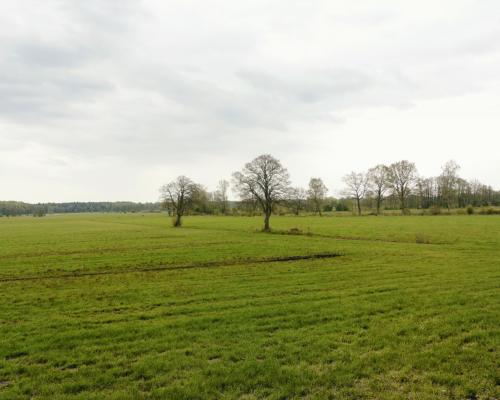 Sülldorf Im Schnaakenmoor