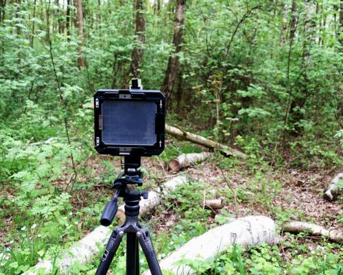 Wald fotografieren
