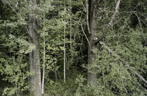 Waldstück bei Risan (ColorNegativ 6x9 Portra160)