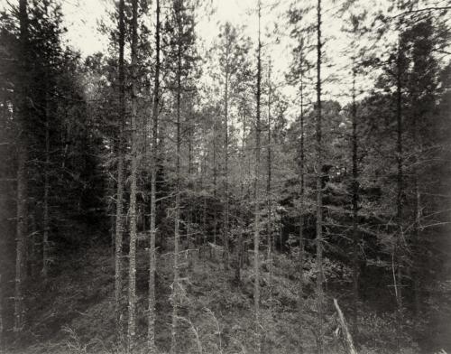 Waldstück bei Husgölen nahe Eksjö in Schweden, direkt belichtet auf 4x5 Fotopapier in Schwarzweiss