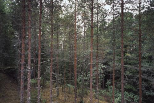 Waldstück bei Husgölen