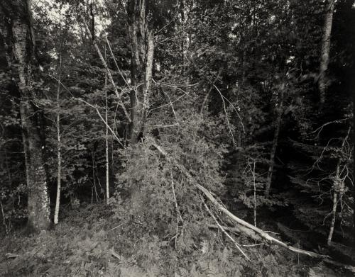 Waldstück bei Risan. Aufnahme auf 4×5 Fotopapier. Papernegative.