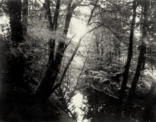 Bille bei Aumühle. Aufnahme auf 4×5 Fotopapier.