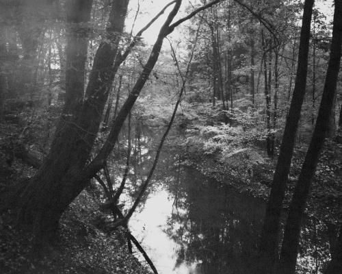 Bille bei Aumühle. Aufnahme auf 4×5 Fotopapier