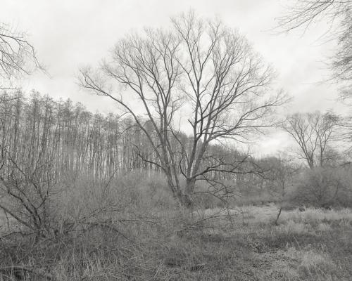 Auwald der Bille bei Wohltorf