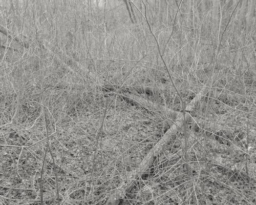 Totholz im Bille Auwald