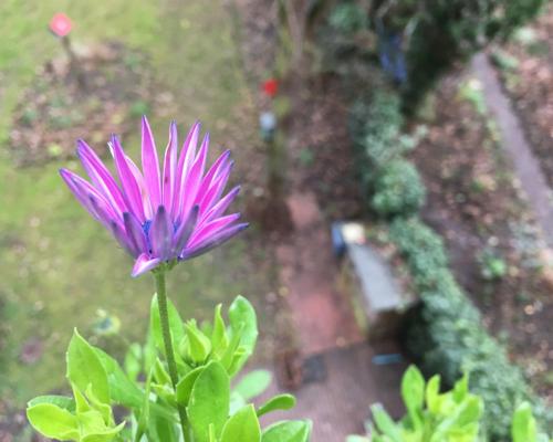 Blüte auf dem Balkon zur Winterszeit