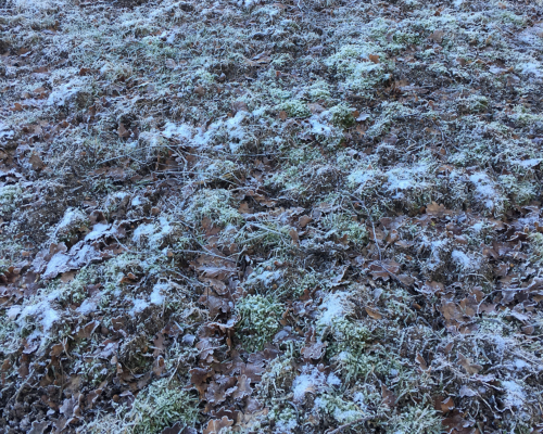 Frostboden