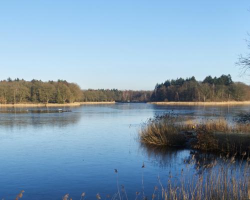 Bredenbeker Teich, winterlich