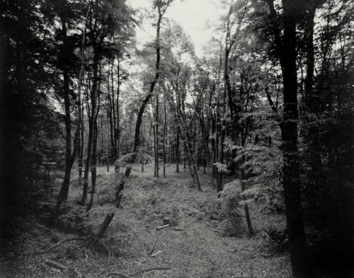 Birkenschlucht im Volkspark Altona. Direkt belichtet auf 4x5 Fotopapier.