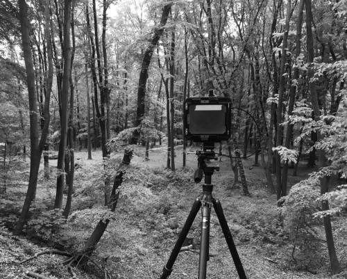 4x5 Kamera am Rande der Birkenschlucht im Volkspark Altona