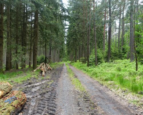 Im Wald zurück nach Bad Orb /Haselbach Tal