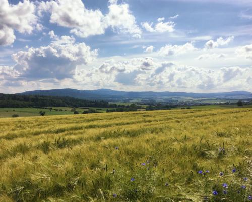 Sommerlicher Taunus bei Wehrheim