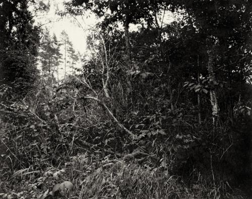 Busch und Gestrüpp nahe meiner Hütte in Schweden